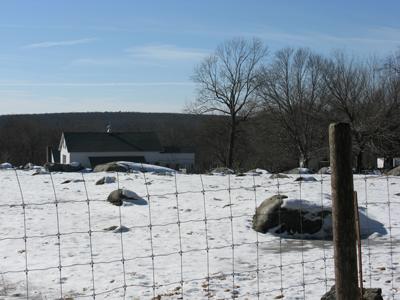 farm21.jpg