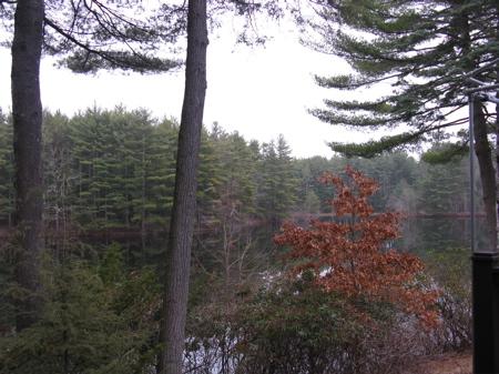 8_pines