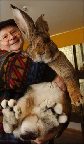 big_bunny.jpg