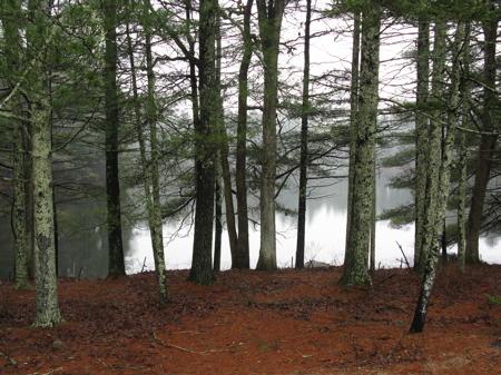 31_pines
