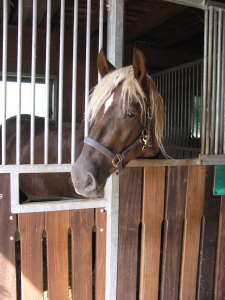 5_horse