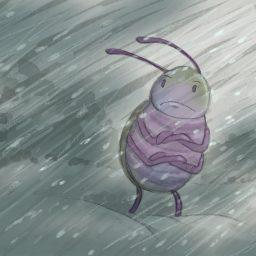 storm bug